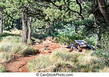 Picnic Table on a Mountainside - Picnic table in the shade...