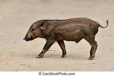 baby wild boar in nature