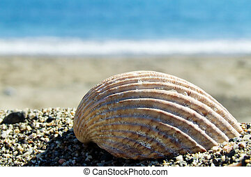 shell - a shell on a beach