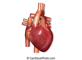 human heart - Digital illustration of human heart in digital...