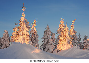 Trees - snowy trees on winter mountains