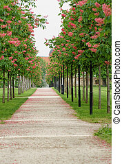 Chestnut tree along the pathway - A chestnut tree along the...