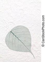 skeleton leaf - green skeleton leaf pressed rice paper