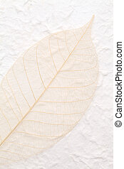 skeleton leaf - blown skeleton leaf on handmade rice paper