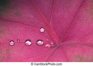 Water Droplets on Red Leaf