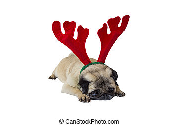 Beige Pug Wearing Christmas Attire 9 - Sad Beige Pug Wearing...