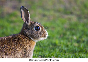 Brown and White Rabbit Close Up Portrait