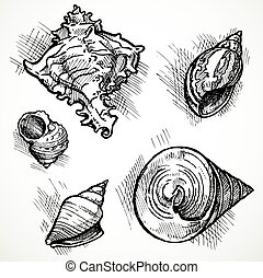 Set of sketches different shapes shell 1