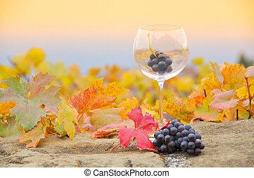 Grapes in the glass. Terrace vineyards in Lavaux region,...