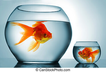 Golodfish discrimination - A big bowl and a small one with...
