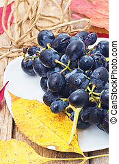 fresh vine - bunch of juicy grapes are harvested in the...