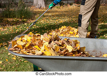Work in the garden - Gardener raking autumn leaves in the...