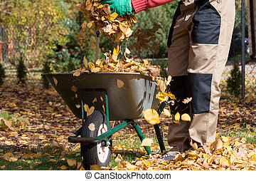 carrinho de mão, cheio, folhas