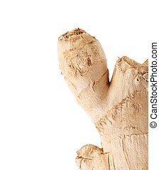 Fresh ginger root Isolated on a white background
