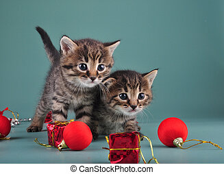 Christmas portrait of cute little kittens. Studio shot.