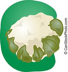 Cauliflower illustration - Sketch of a cauliflower....