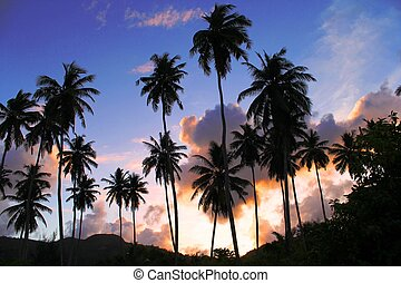 coconuts at sunset - silhouettes of palm trees at sunset...