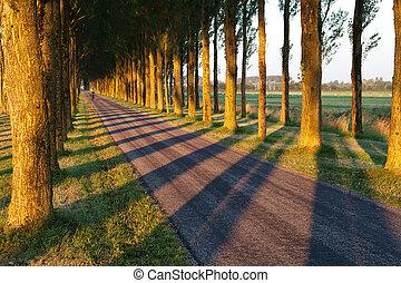 tree shadow pattern on bike road in morning sunlight,...