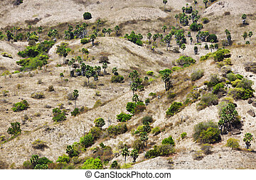Komodo Island - View from a hill over Komodo Island