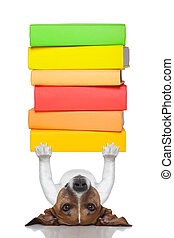 smart dog lifting a stack of books