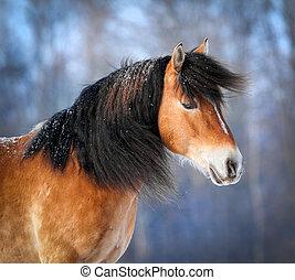 Horse head in winter - Portrait of horse in winter.