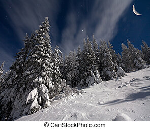 night view of snow-covered fir trees with stars and moon in the sky