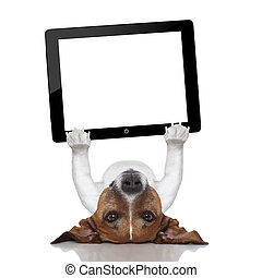dog computer - dog holding a tablet pc lying upside down