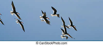Flying away birds - A bunch of different seaguls flying over...