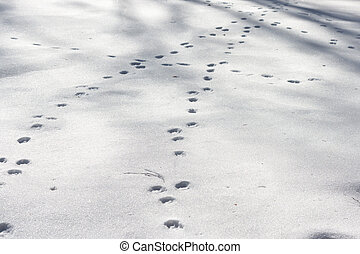 Dog footprints at the snow in winter