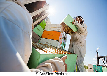 Beekeepers Unloading Honeycomb Boxes From Truck