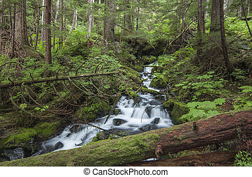 Rushing cascade in forest - Beautiful waterfall rushes...