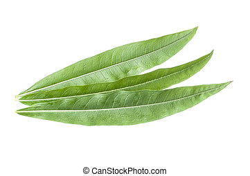 Fireweed leaves - Closeup of three fresh green lance-shaped...