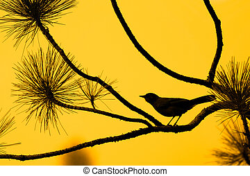 Lonely Bird - Silhouete of a bird against a clear orange sky...