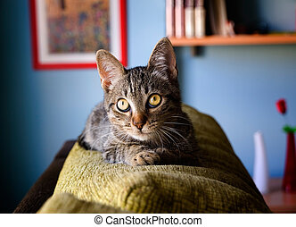 Cat lying on top of a sofa inside home.