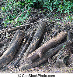 wood scraps - The wood is cut into pieces, leaving them in...