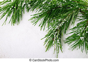 Pine branch - Green pine tree branch on snow background