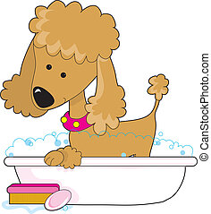 Poodle Bath Apricot - A  cute apricot poodle in a bath tub