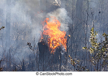 Forest Fire - Tree burning in a forest with smoke and flames