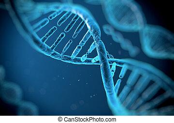 ADN, Moléculas