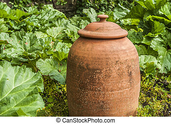 Forcing Jar - An old terracotta forcing jar with rhubarb...