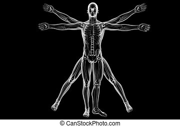 Vitruvian man with skeleton