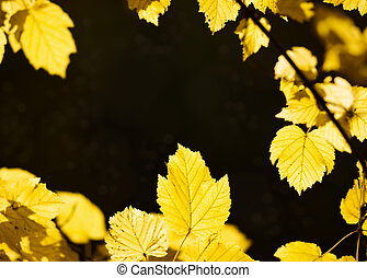 Autumn leaves background - Yellow autumn leaves background