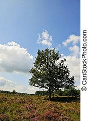 tree in heather landscape