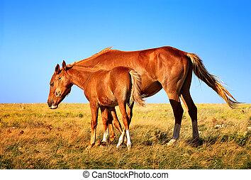 cavalo, égua, potro, mãe, bebê, fazenda,...
