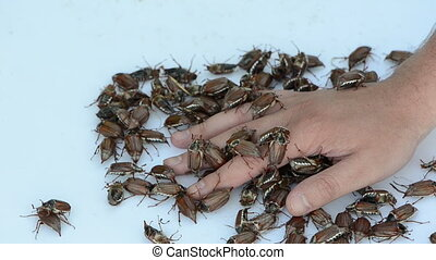palm beetle pile - crawling bugs pile man palm withdraws his...