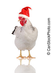 Hen in a Santas hat - White hen in a Santas hat, isolated on...