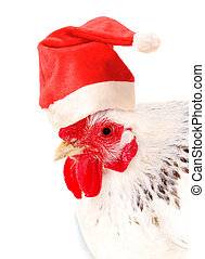 Hen in a Santas hat - Portrait of white hen in a Santas hat,...