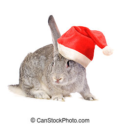 Rabbit in a Santas hat - Rabbit in a Santas hat, isolated on...