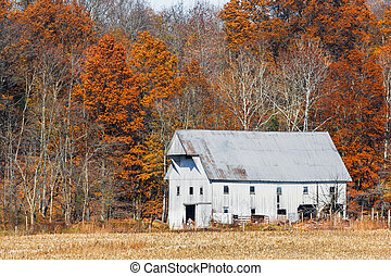 Whtie Barn and Autumn Leaves - An old white barn is backed...
