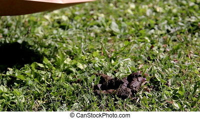 Cleaning after a Dog poop - Cleaning after a dog poop; using...